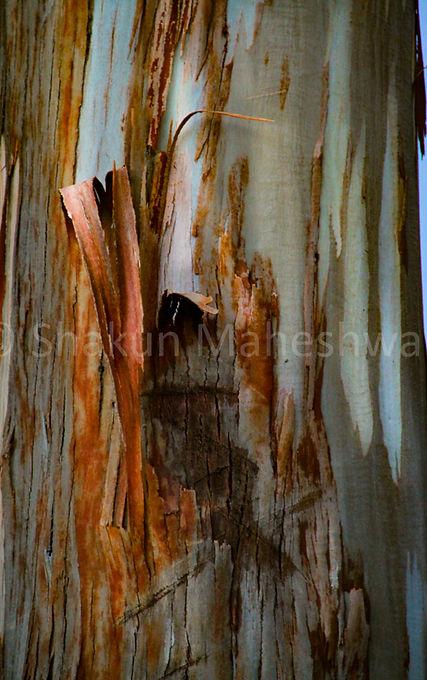 Bark Patterns I