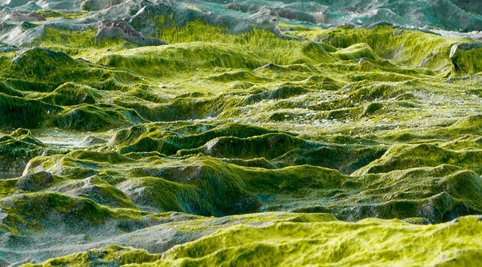 Lime Layers
