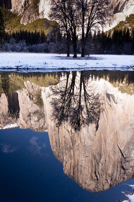 Reflected El Cap with Tree