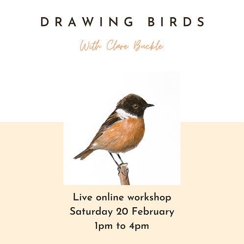 Online workshop - Drawing Birds - Saturday 20 February 1pm - 4pm