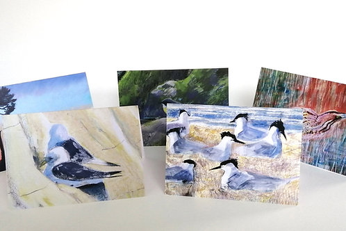 Set of 5 cards - Birds and habitats