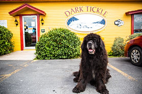 A Newfoundland dog sits in front of the yellow store front.