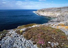 The limestone shoreline of Burnt Cape Ecological Reserve.