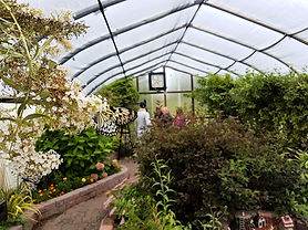 Visitors walk through a lush indoor butterfly garden.