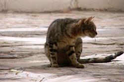 Le chat d'Amar.