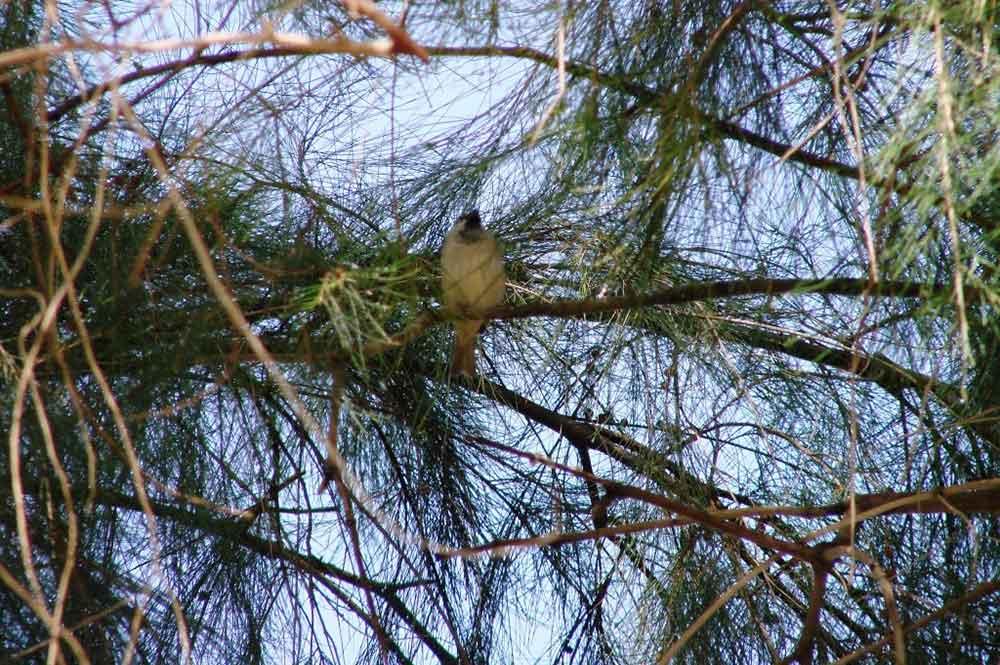 Oiseau sur la branche.