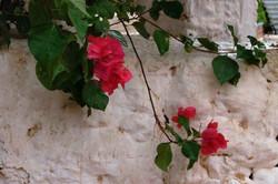 Fleurs si rouges.