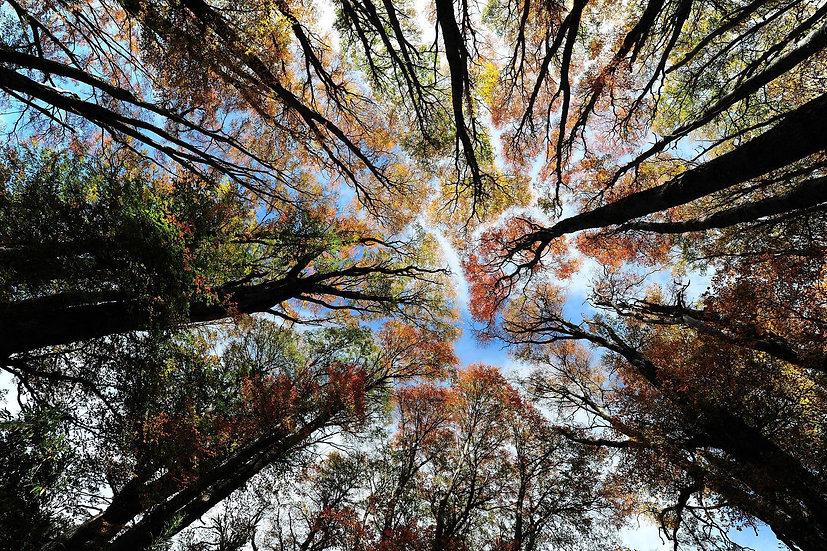 Autumn Patagonia