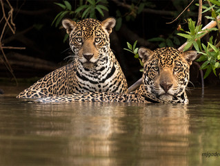2017 Pantanal trip