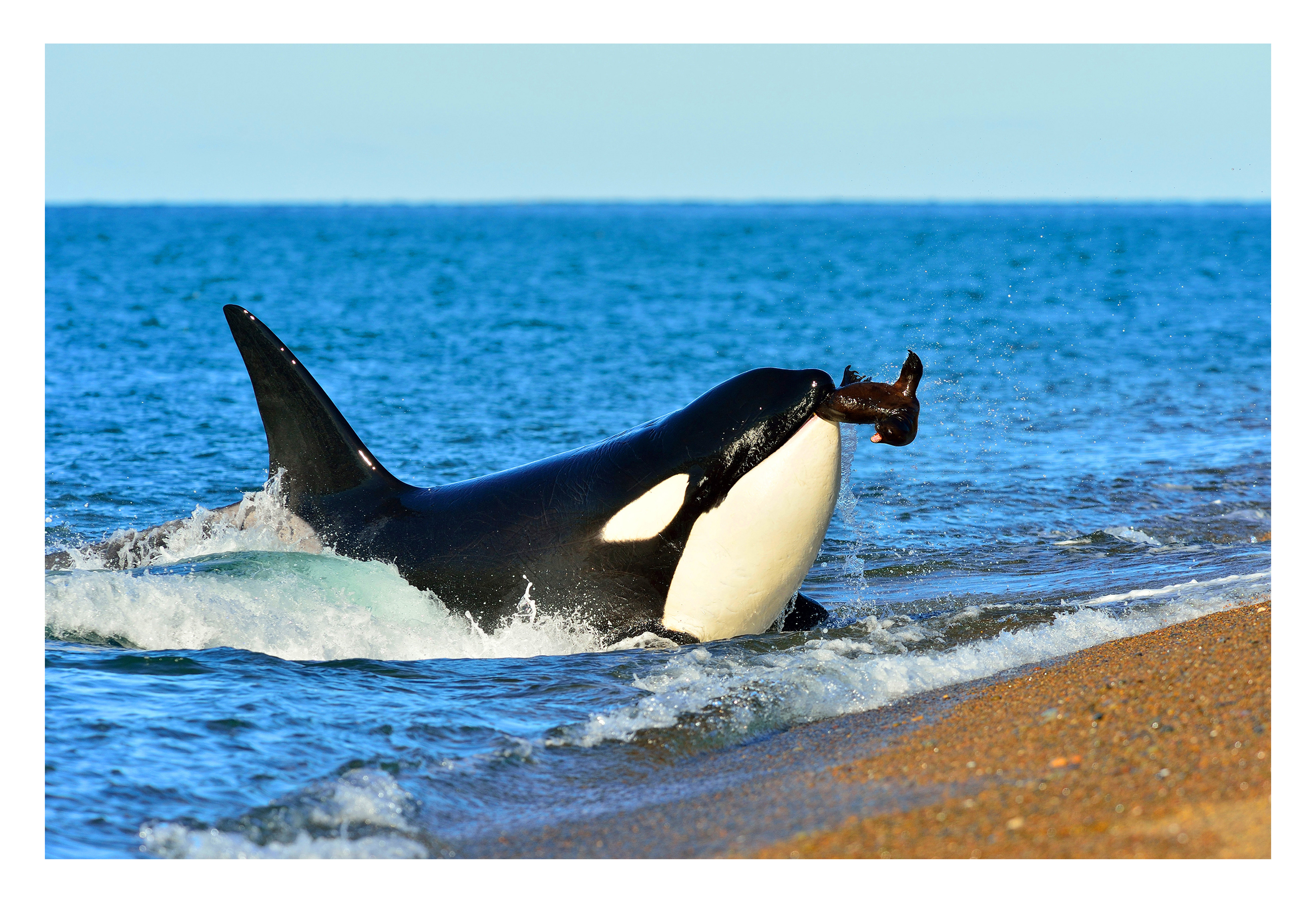 Orca Photography Safari