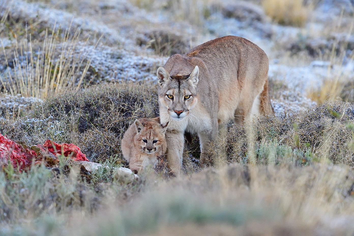 Puma Photography Safari