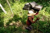 Fokus Liputan : Penambangan Batu Paras Ilegal yang Terus Berlangsung di Tukad Petanu (Bagian 1)