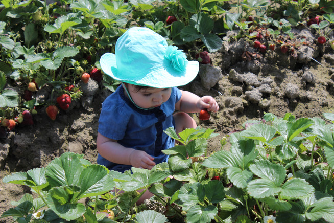 Strawberry Picking and Expecting Perfection