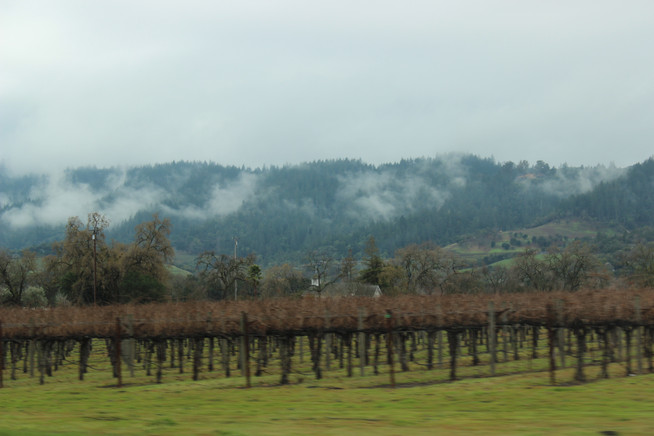 Day Trip to Napa