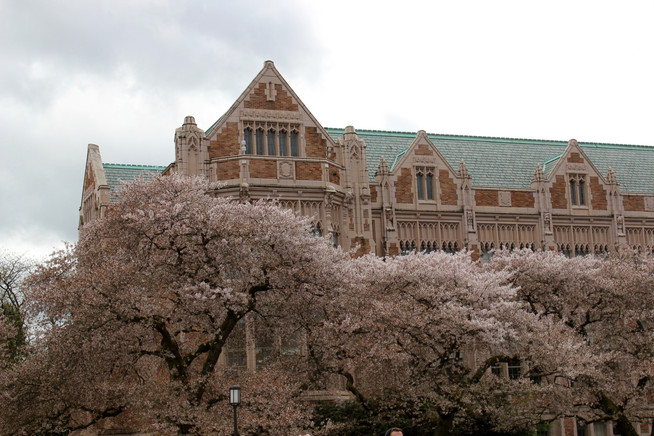 A Visit to the Cherry Blossoms at University of Washington