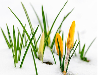5 Easy Ways to Shift Your Body out of Winter Mode and Into Spring Action