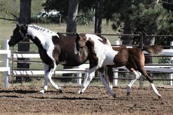 Dustyand Foal