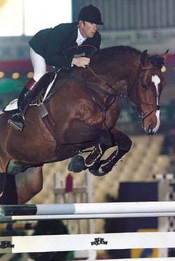 Adam IV stallion