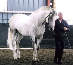 Horse_Beeston_Laird-big