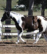 Dustyand Foal.jpg