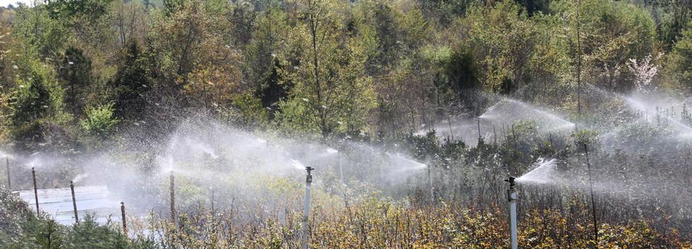 Farm Water.JPG