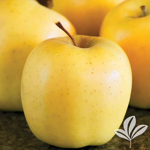 Apple Tree 'Golden Delicious' 5G