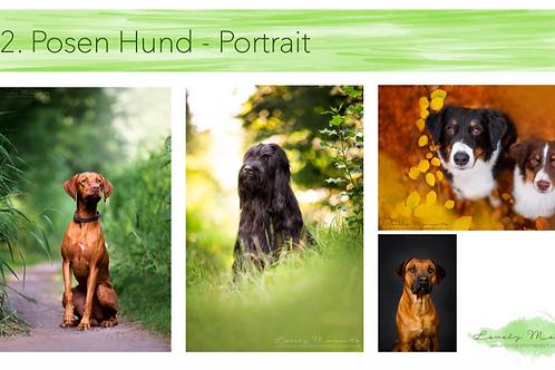 """Webinar """"Posing - Hunde, Pferde & Menschen richtig positionieren"""""""