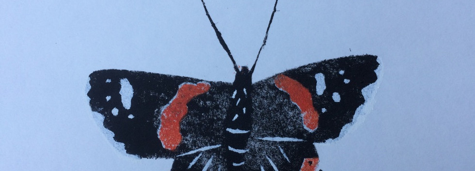 Red Admiral, Paper, 12x10cm, Edition of 6.  Unmounted £75 + p&p.