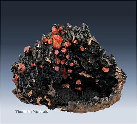 Vanadinite on Manganese Oxides : Taouz, Morocco