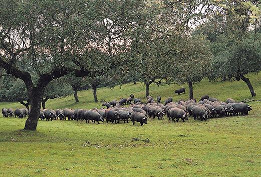 Carnicería López Madrid. Animales criados al aire libre