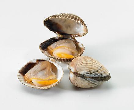 Las mejores conservas de marisco