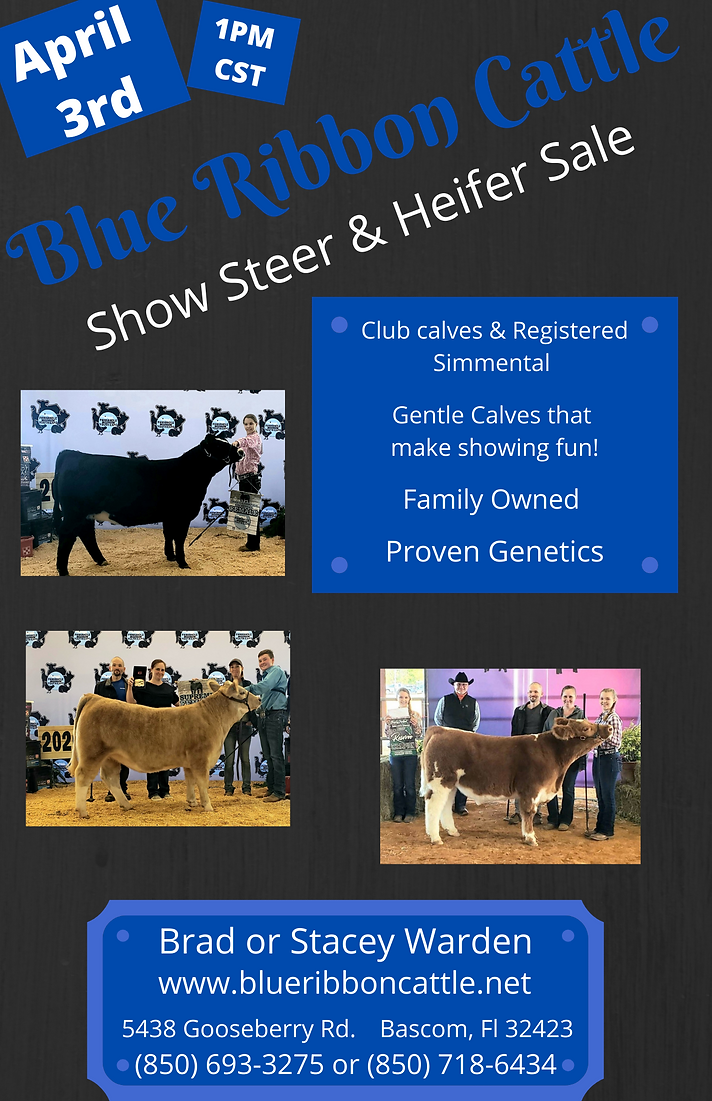Blue Ribbon Cattle Annual Show Cattle Sa