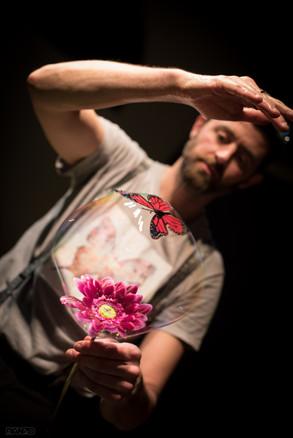 fiorebolla e farfalla