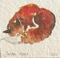 Sleeping Vixen | Bookmark