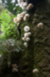 fungi numbersevendulverton walking book