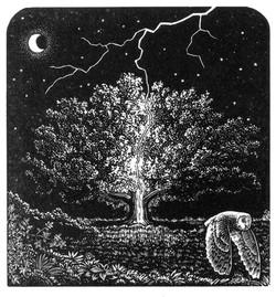 AE The Lightning Tree numbersevendulvert
