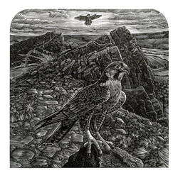 a peregrine on the roaches