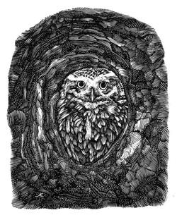 AE Little Owl Looks Out numbersevendulve