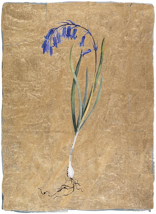 bluebell | the lost words