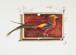 golden pheasant | robin hobb
