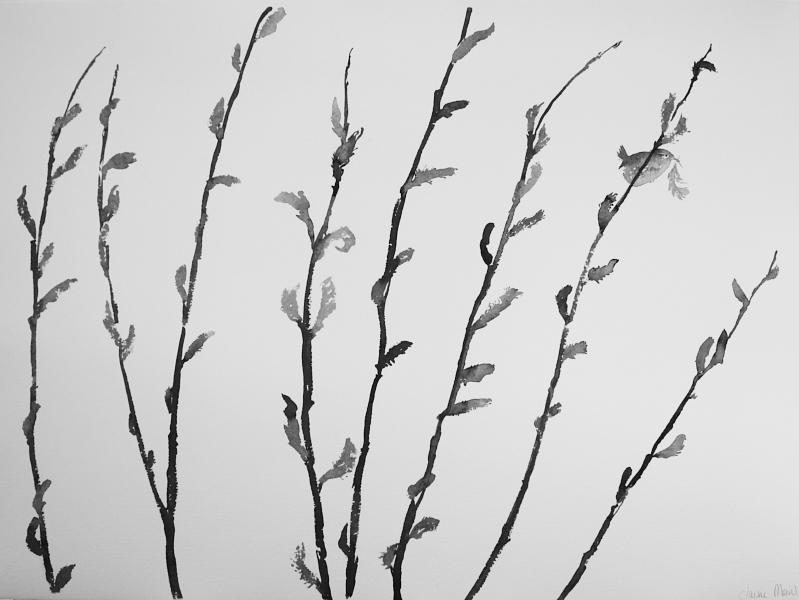 wren | spell songs