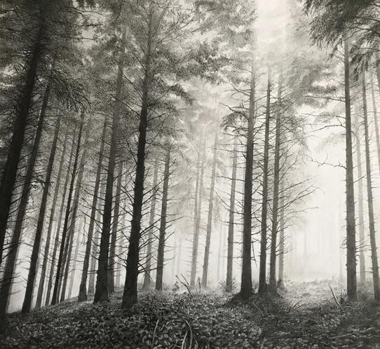 paul newman silver mist