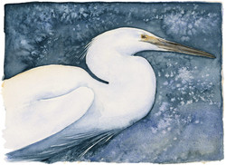 little egret | the lost spells
