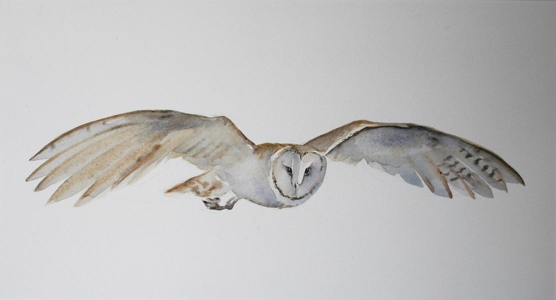 barn owl | megan Lindholm