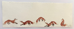 fox five