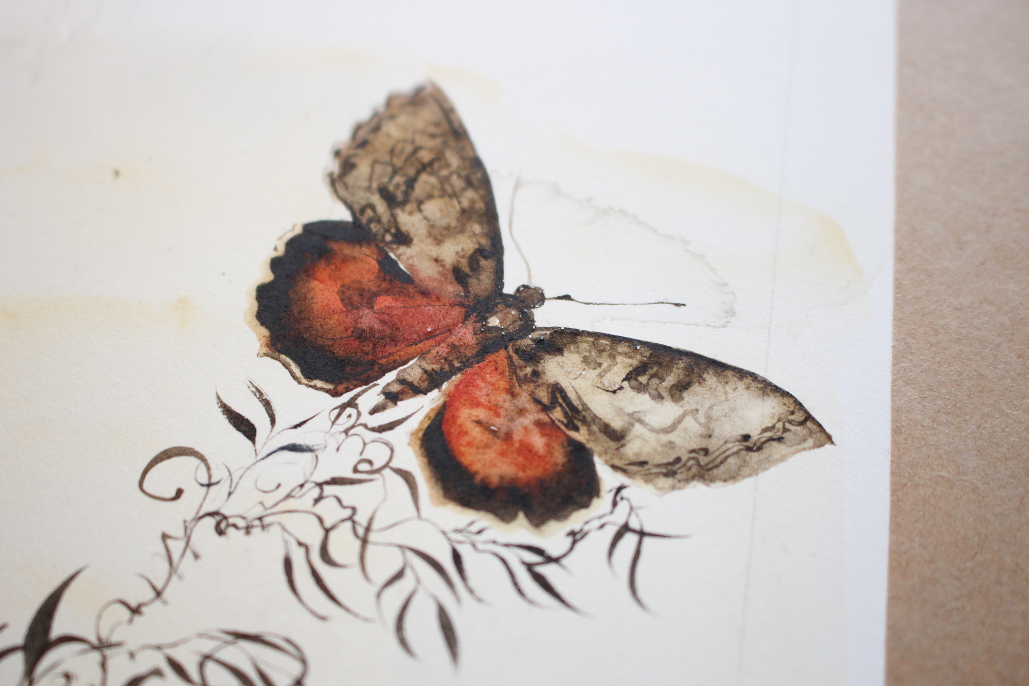 JM unwinding moth in progress Dulverton