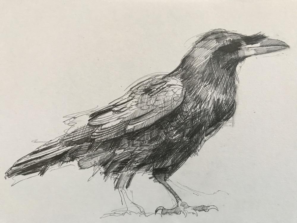 PN raven numbersevendulverton
