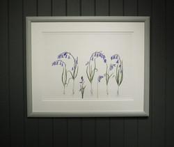 seven bluebells