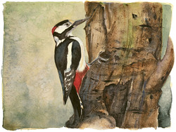 great spotted woodpecker | the lost spells
