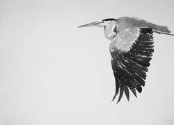 heron | spell songs